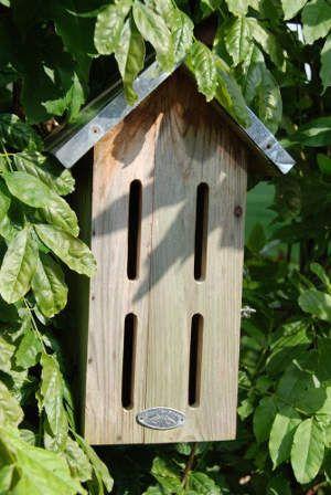 Schmetterlingshaus Oder Schmetterlingskasten Für Den Eigenen Garten